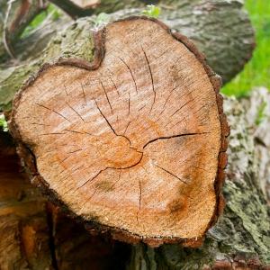 boomstam trouwplanner Overijssel Puur trouwen